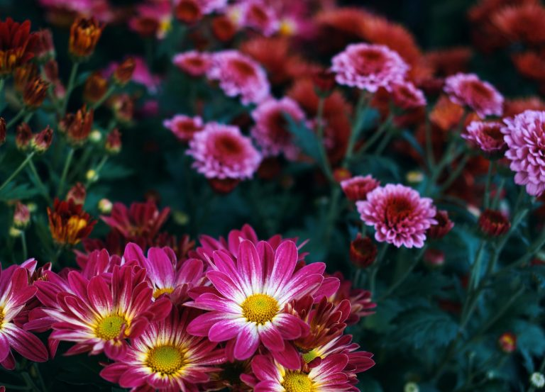 Close-up view of vivid flower in garden
